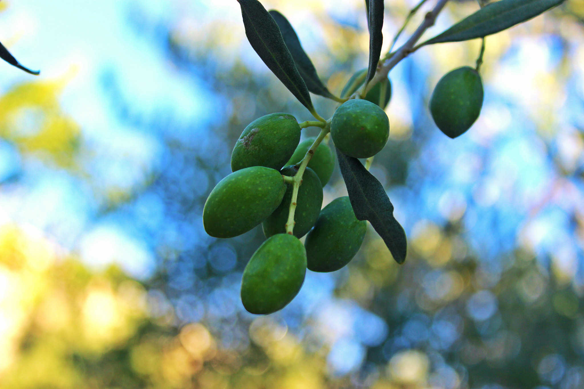 Photograph OLIVES by HidayahZ on 500px