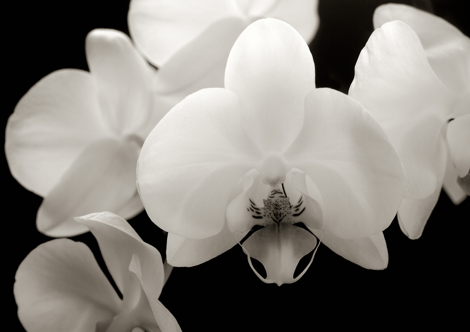 Photograph Orchid by Jiří Vašina on 500px