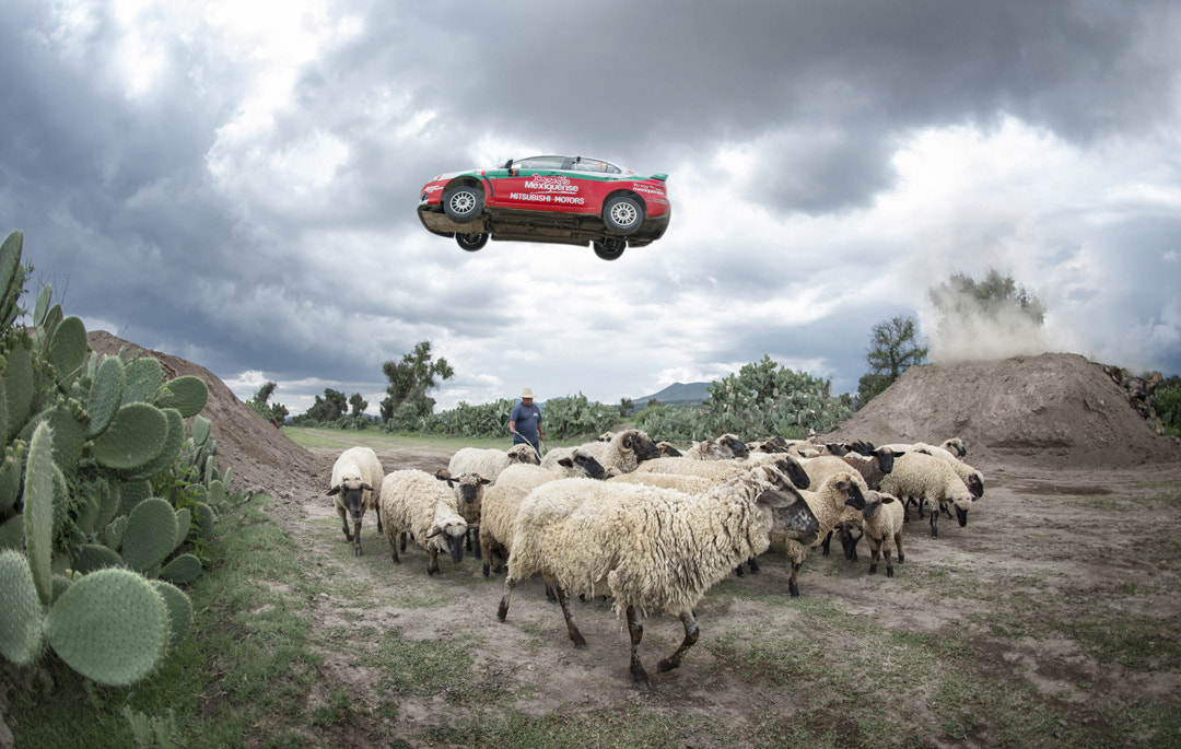 Photograph Benito Guerra Jr. jumping sheep by Marcos Ferro on 500px