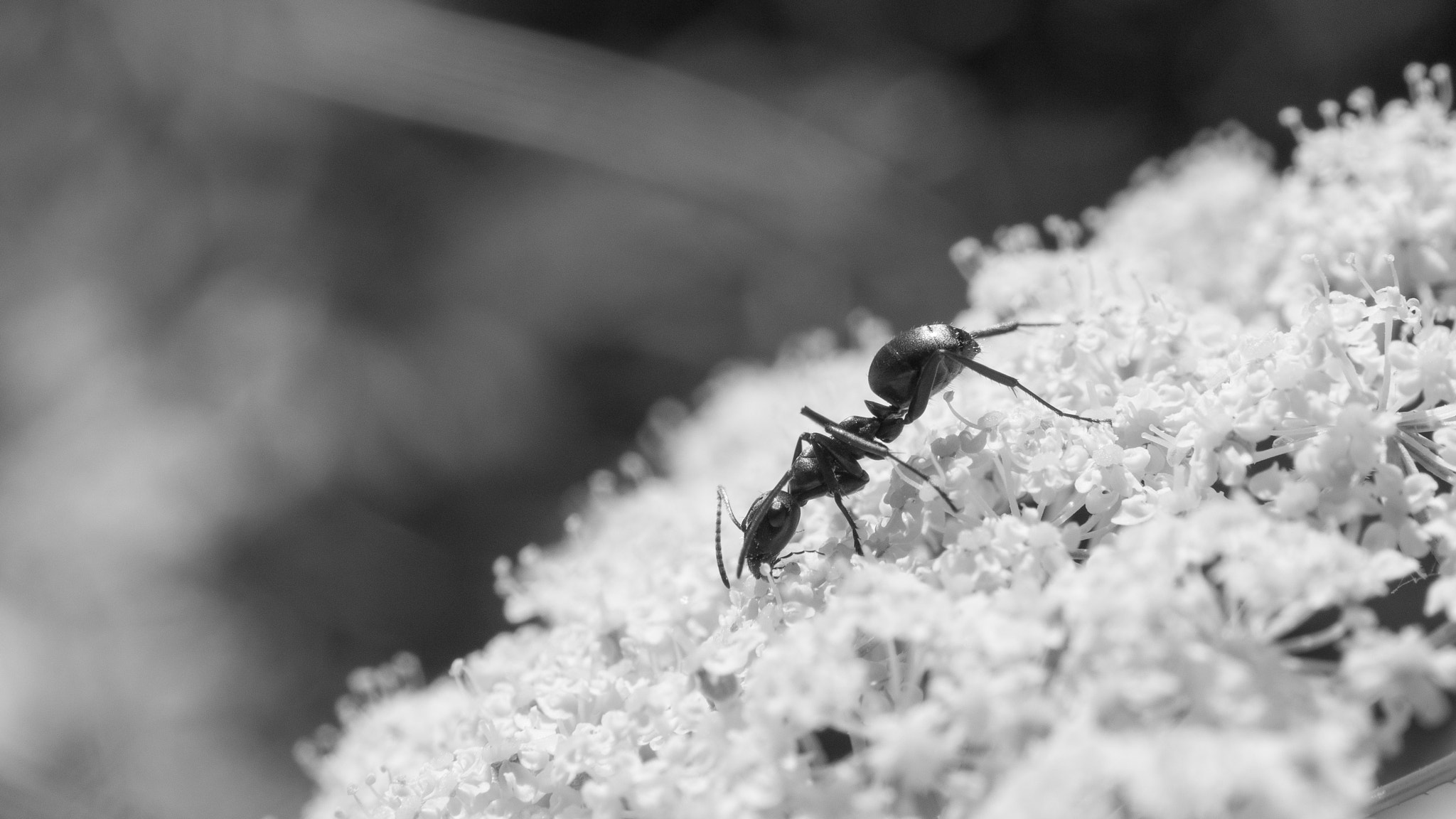 Photograph Grazing Ant by Ryan Kimber on 500px
