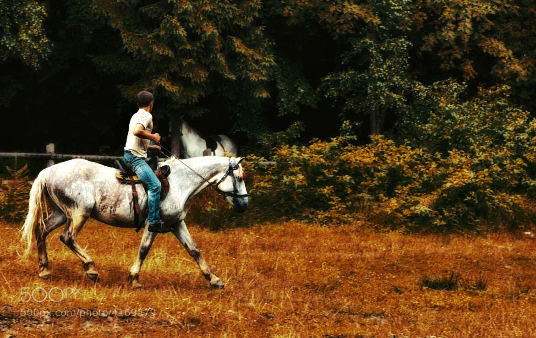 Photograph Dream Horse by Vuqar Sevdimali on 500px