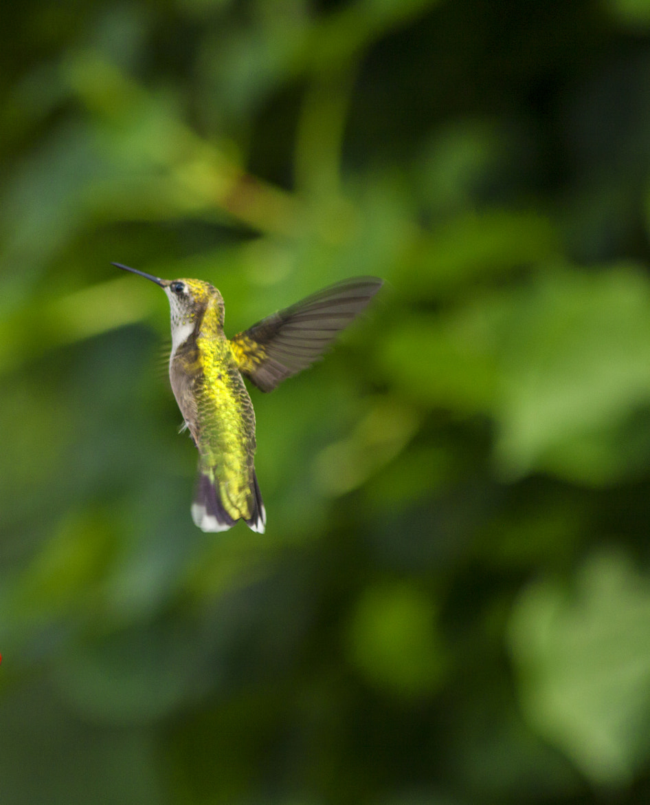 Photograph Humming by Samir Mohanty on 500px