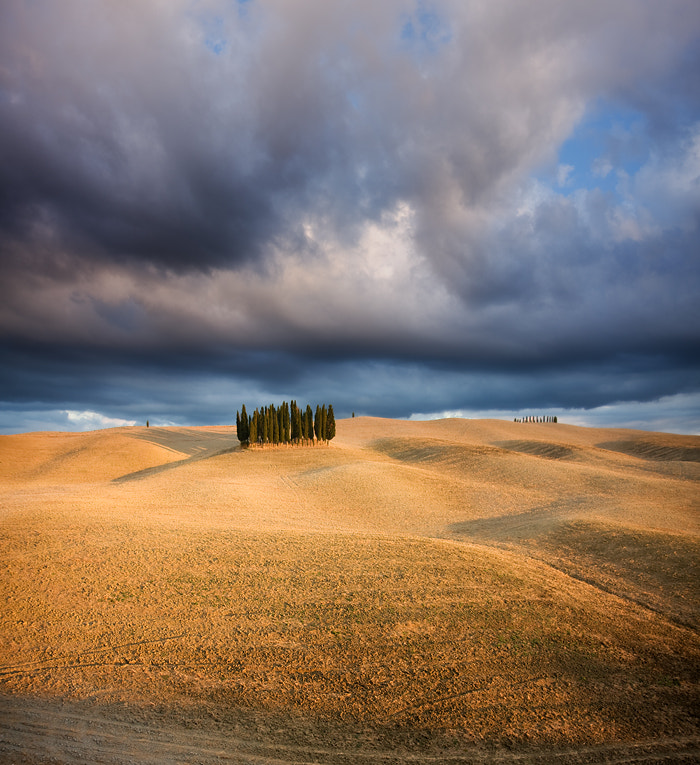 Photograph Afternoon cypresses by Marcin Sobas on 500px