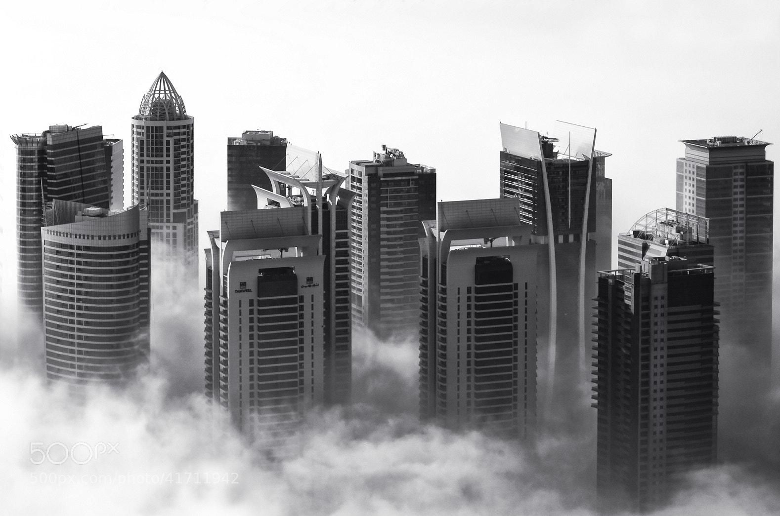 Photograph morning mist by Sandra Sachsenhauser on 500px