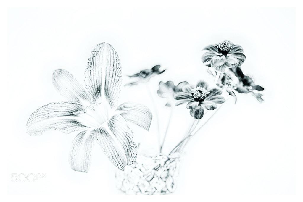 Photograph Flower art... by Almqvist Photo on 500px