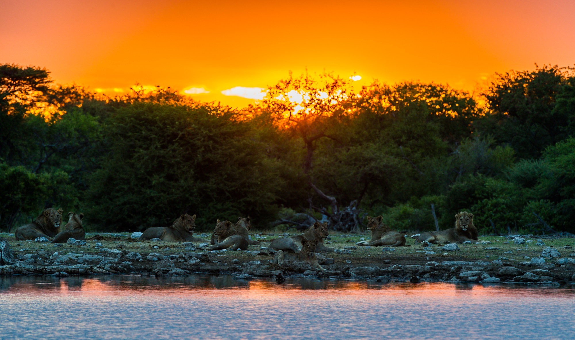 Photograph Sunset for Lions by Bridgena Barnard on 500px