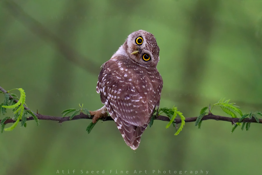 Photograph tilt.. by Atif Saeed on 500px