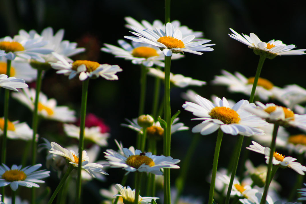 Photograph Summer Flowers by Brianna DeJoy on 500px
