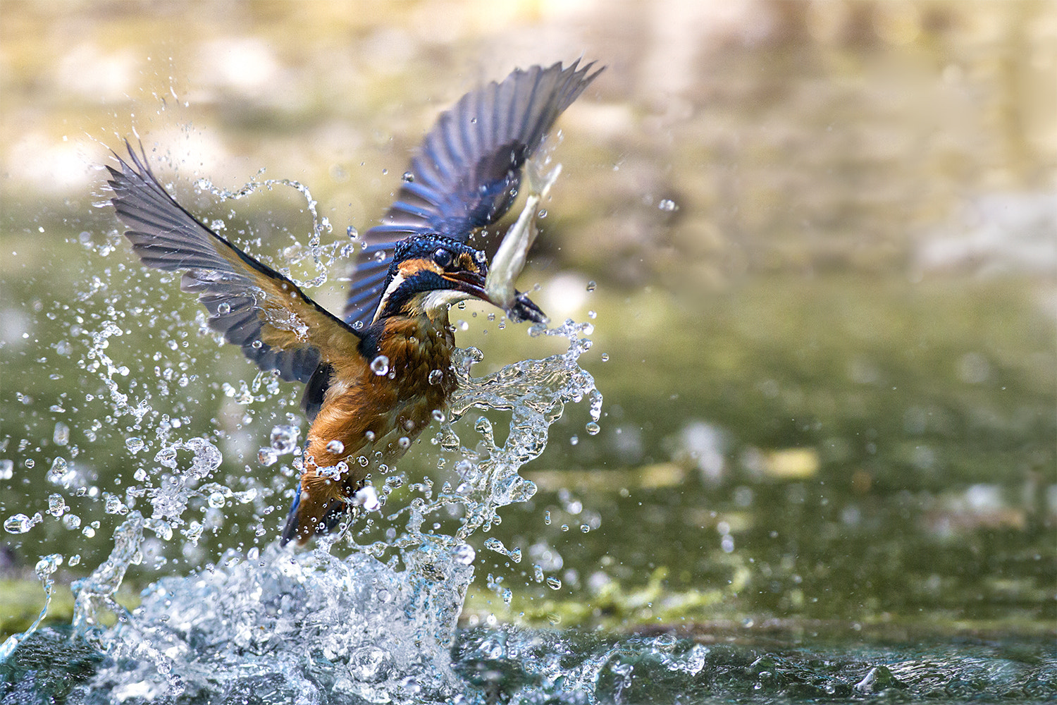 Photograph Angel water's catch by Marco Redaelli on 500px