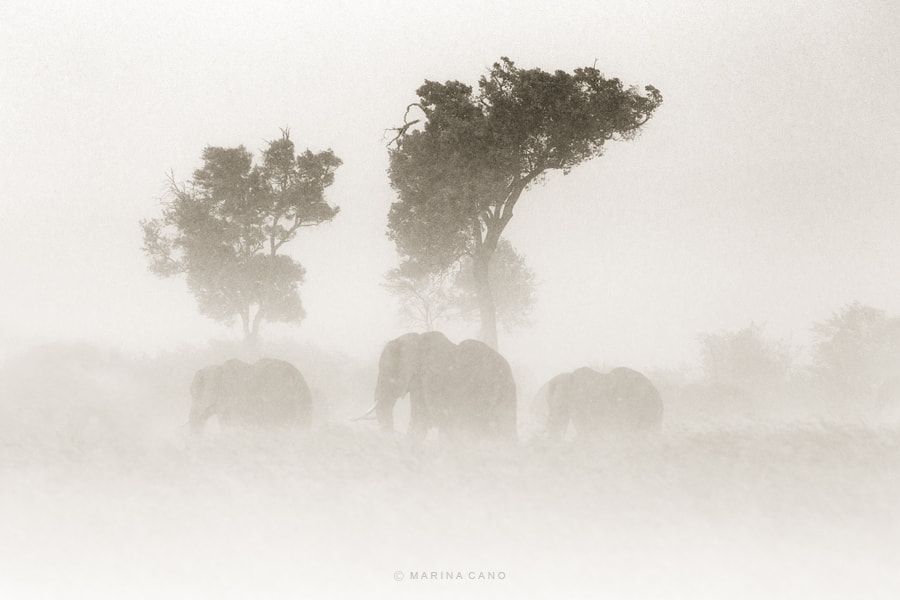 Photograph Out of Africa by Marina Cano on 500px