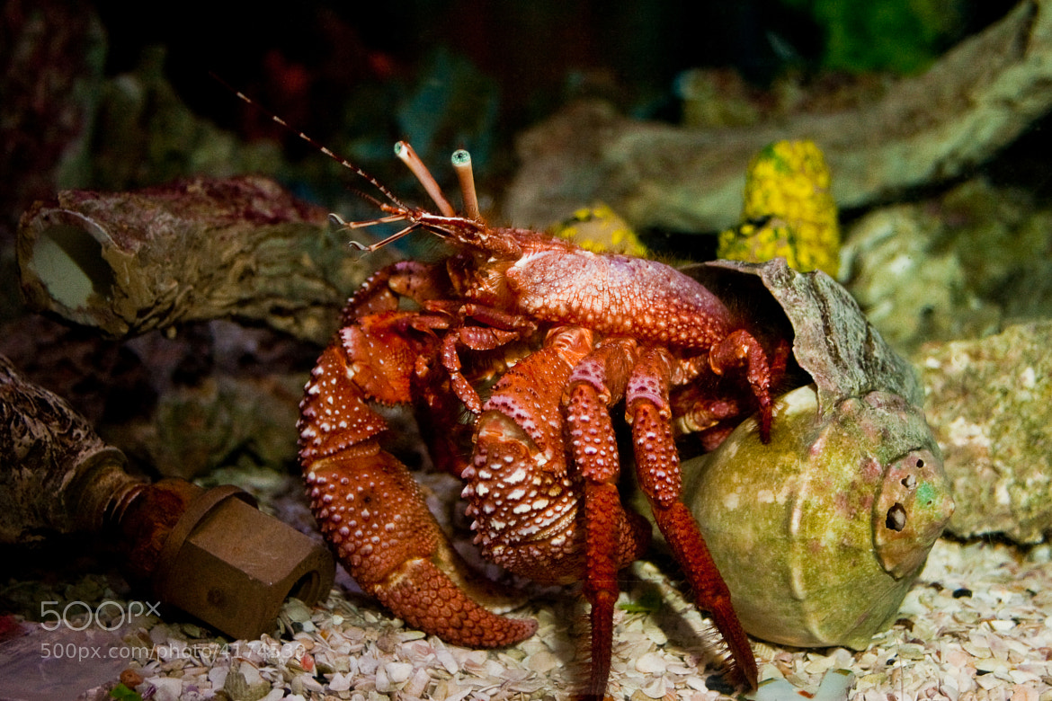 Photograph Sea Creature by Blake Lyons on 500px