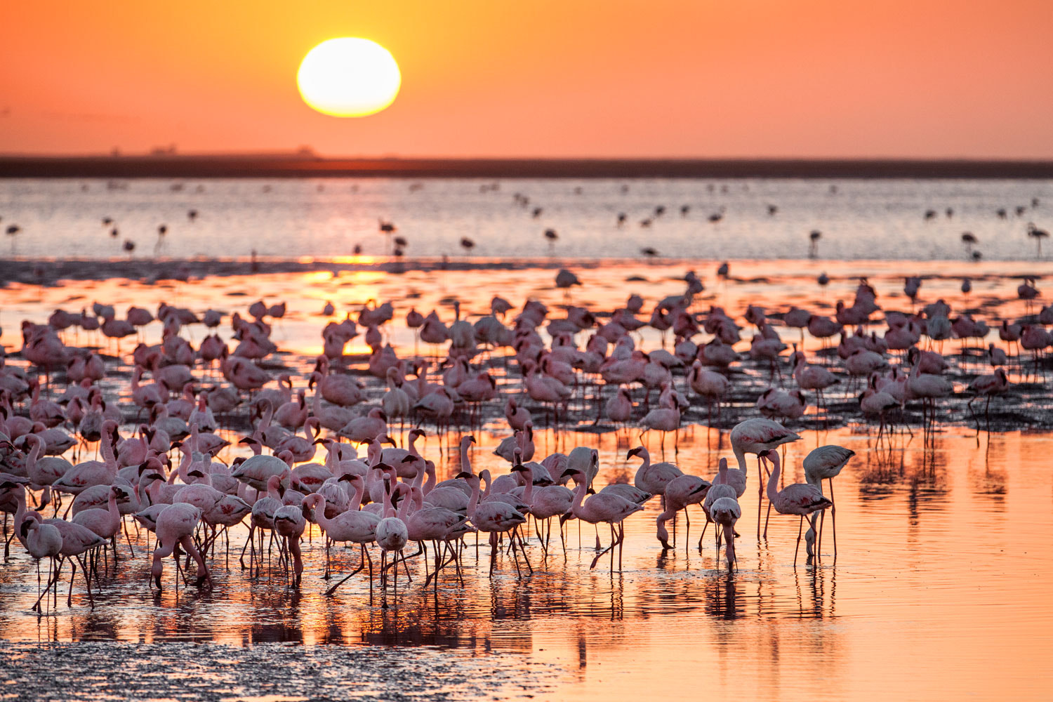 Photograph Flamingo sunsets by Marina Sorokina on 500px