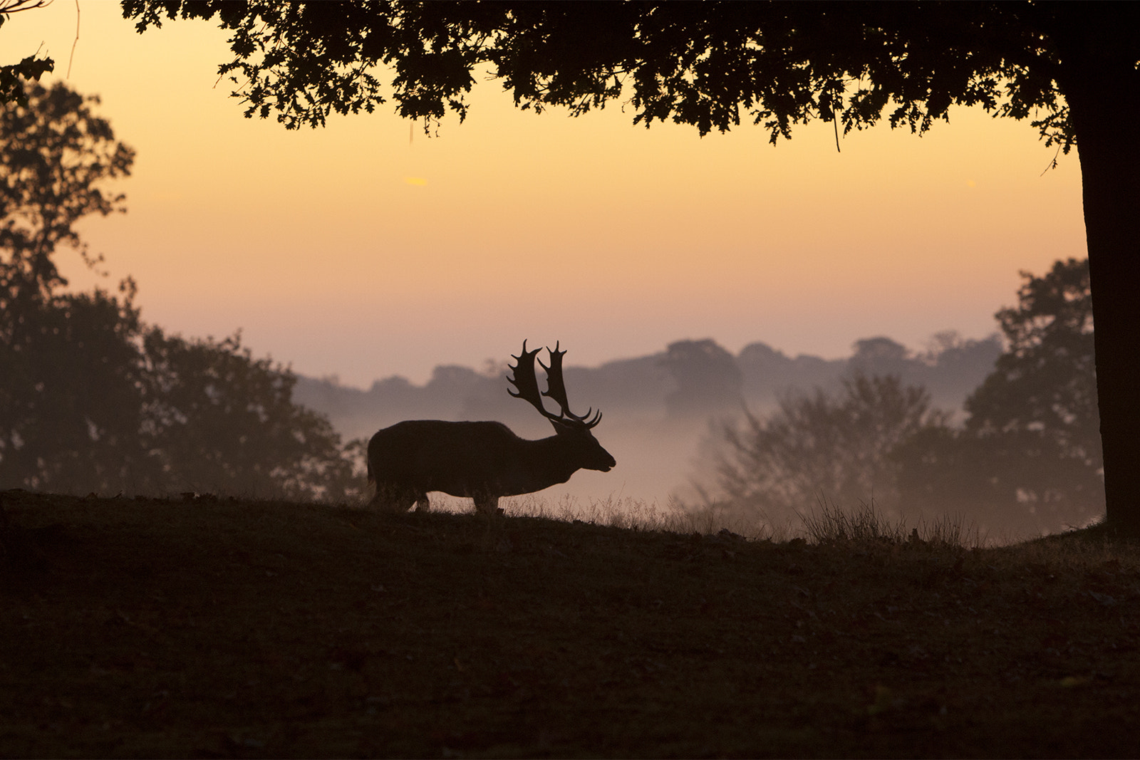 Photograph Fallow by Ian Schofield on 500px