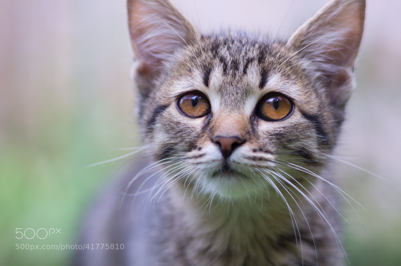 Photograph Beautiful cat by Alex Demchenko on 500px