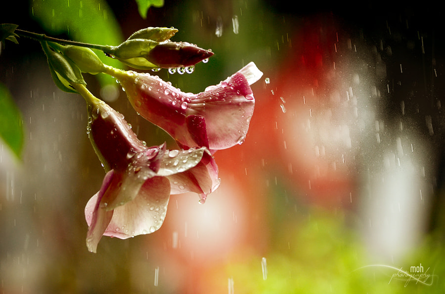 Photograph Monsoon Beauty by Mohan Duwal on 500px