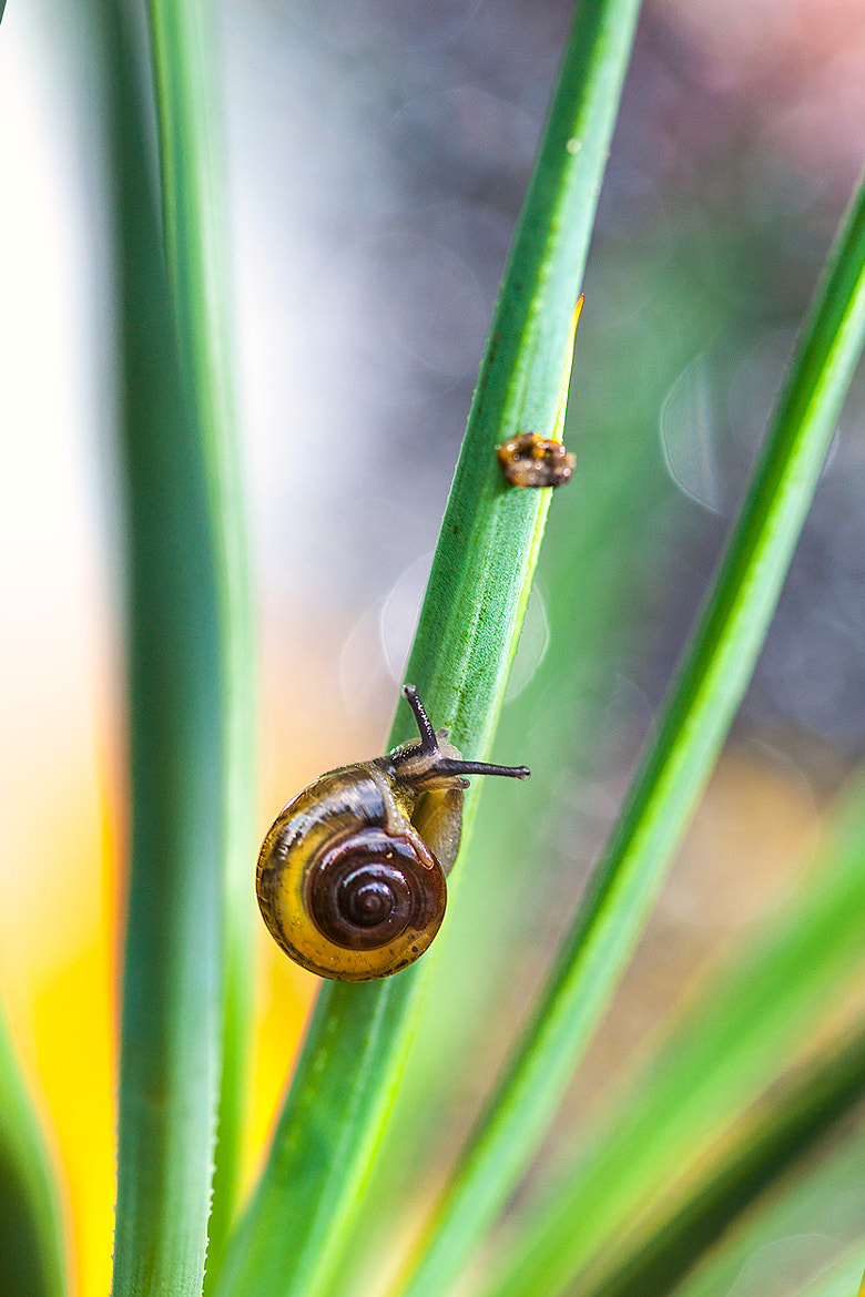 Photograph Mr. Snail by Benjamin Pelawi on 500px