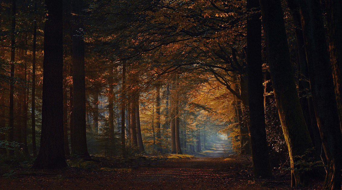 Photograph The endless road by Jan Paul  Kraaij on 500px