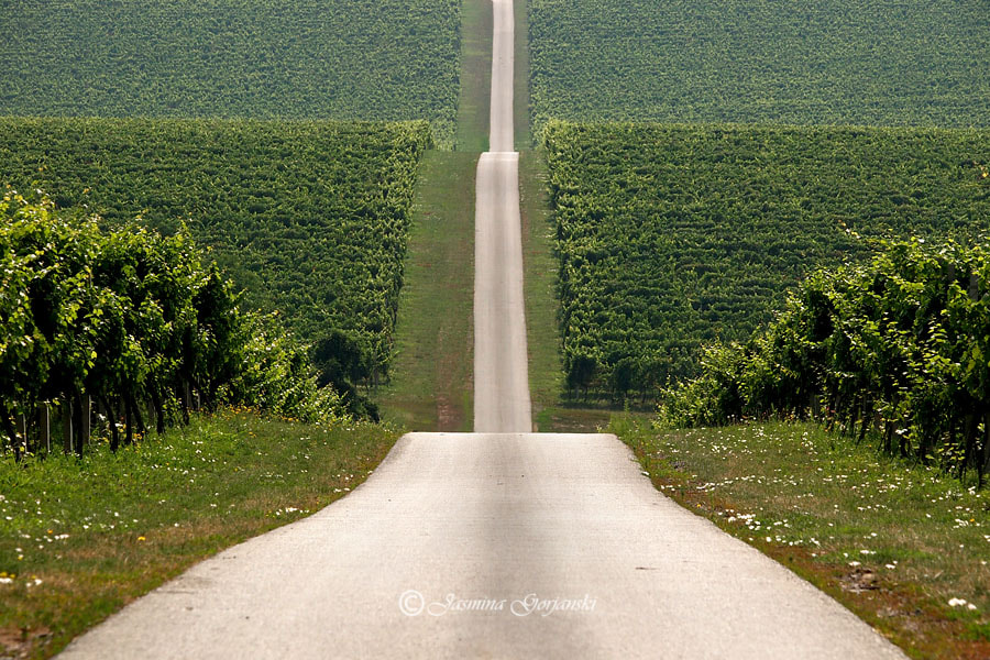 Photograph The road without end by Jasmina Gorjanski on 500px