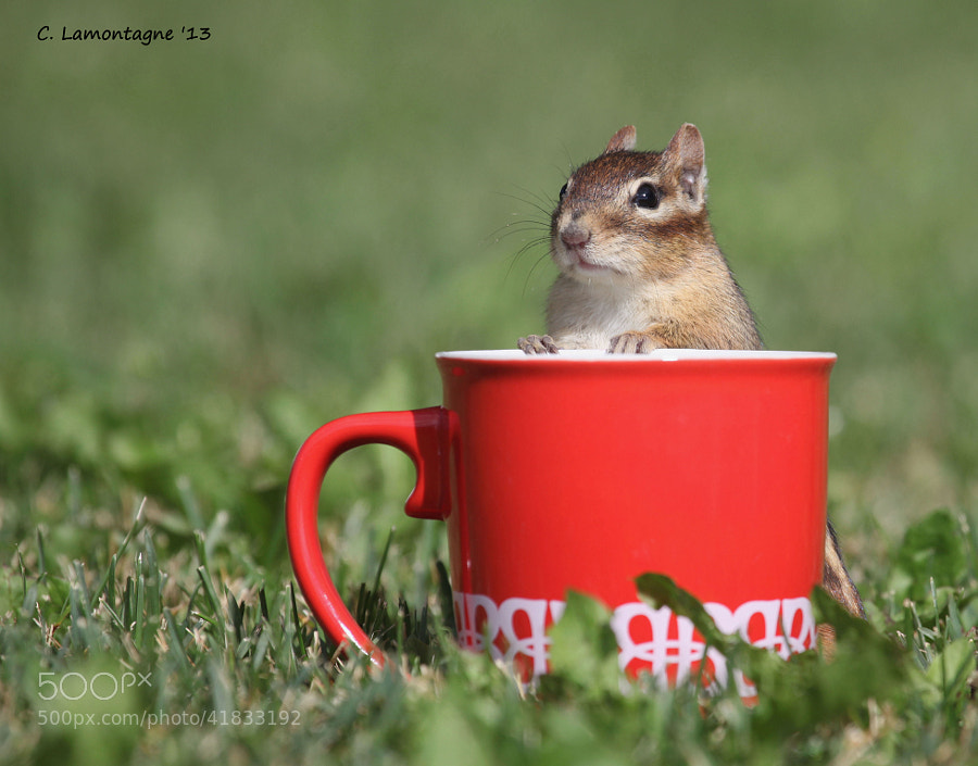 Having fun with the Chipmunks in my yard one day :)