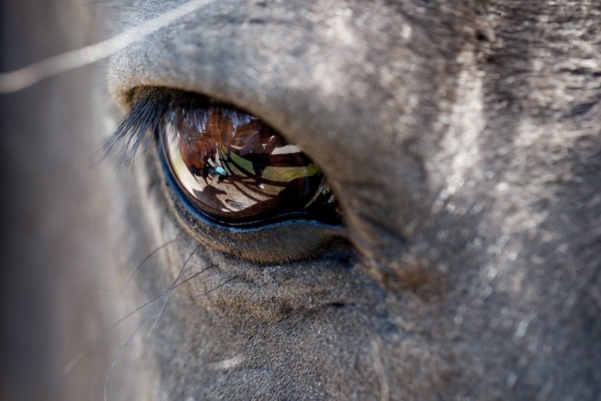 Photograph The Soul of a Horse by Andreas Hejndorf on 500px