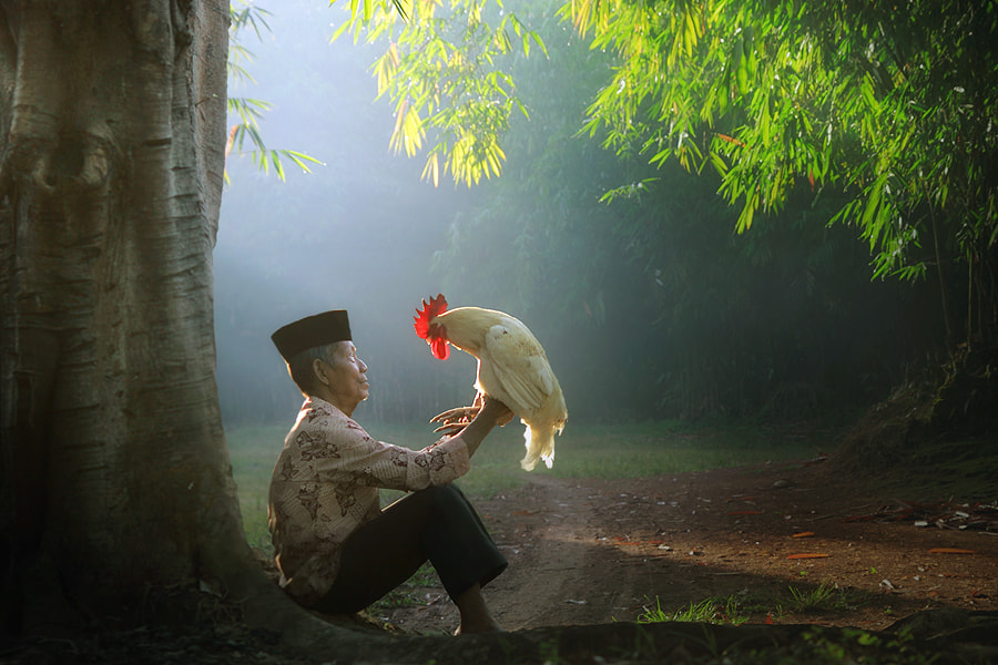Photograph good morning my rooster by asit  on 500px
