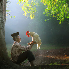 good morning my rooster by asit  (asit)) on 500px.com