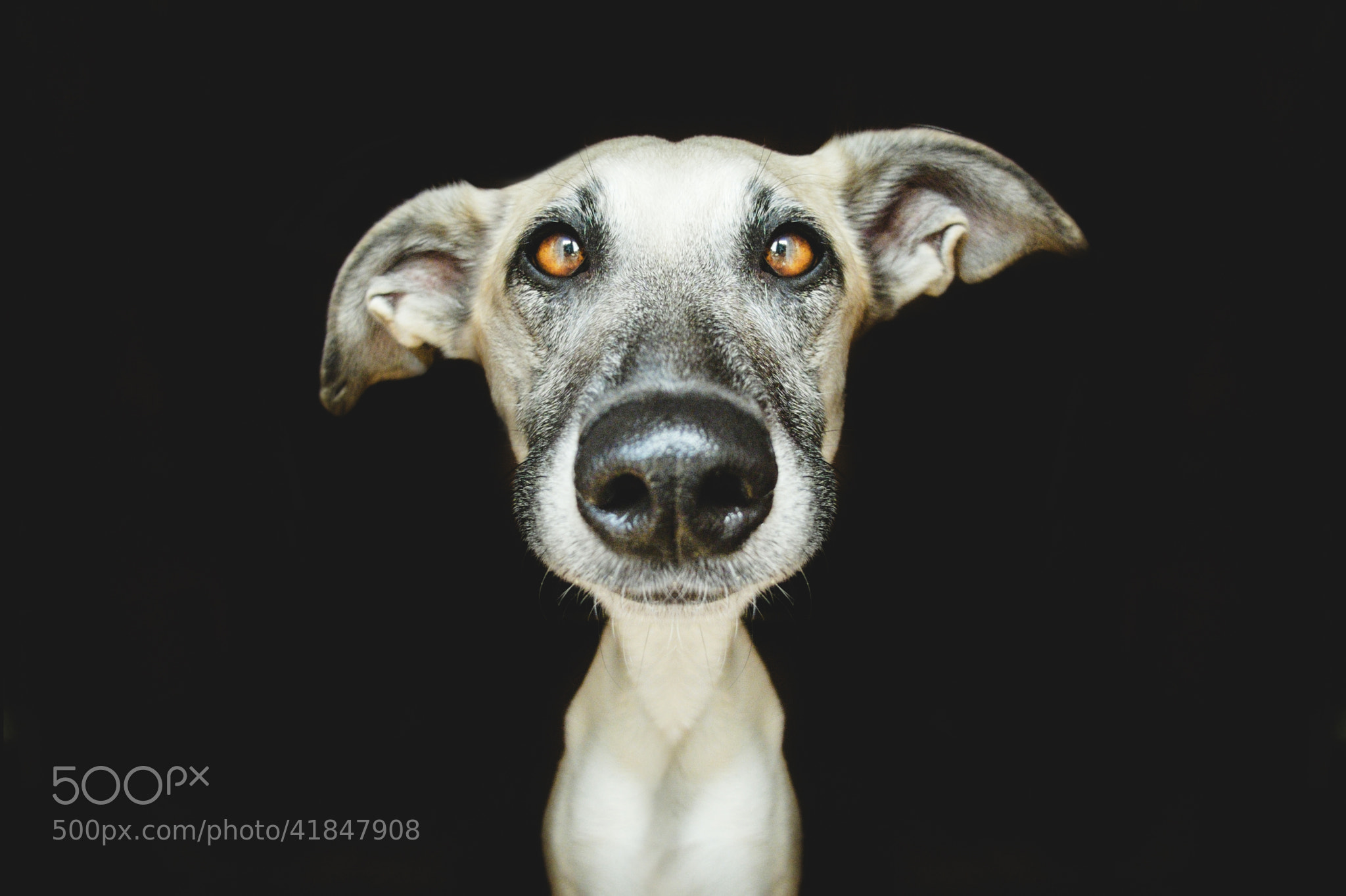 Photograph Dumbfounded by Elke Vogelsang on 500px