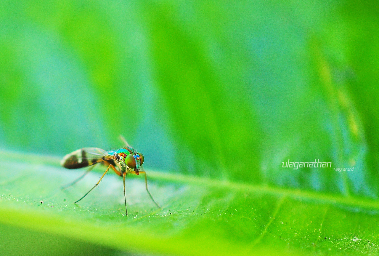 Photograph green fly by Ulaganathan Vijay Anand on 500px