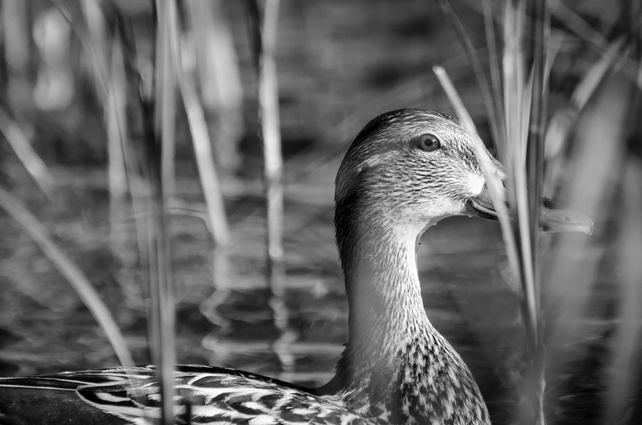 Photograph In the Reeds by Laurens Kaldeway on 500px