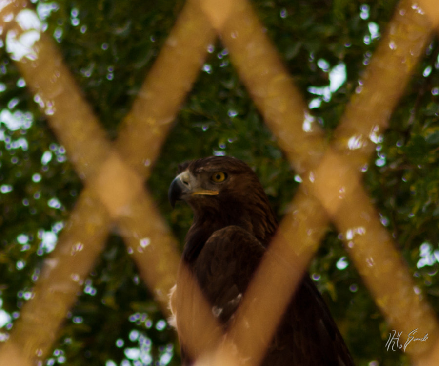 caged!!