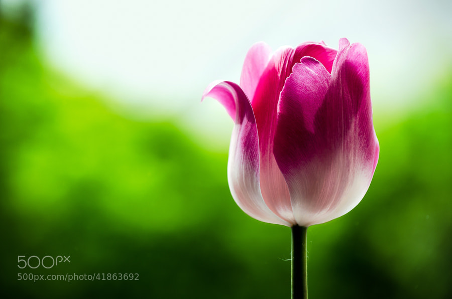 Photograph Vivid Bloom by Sim On on 500px