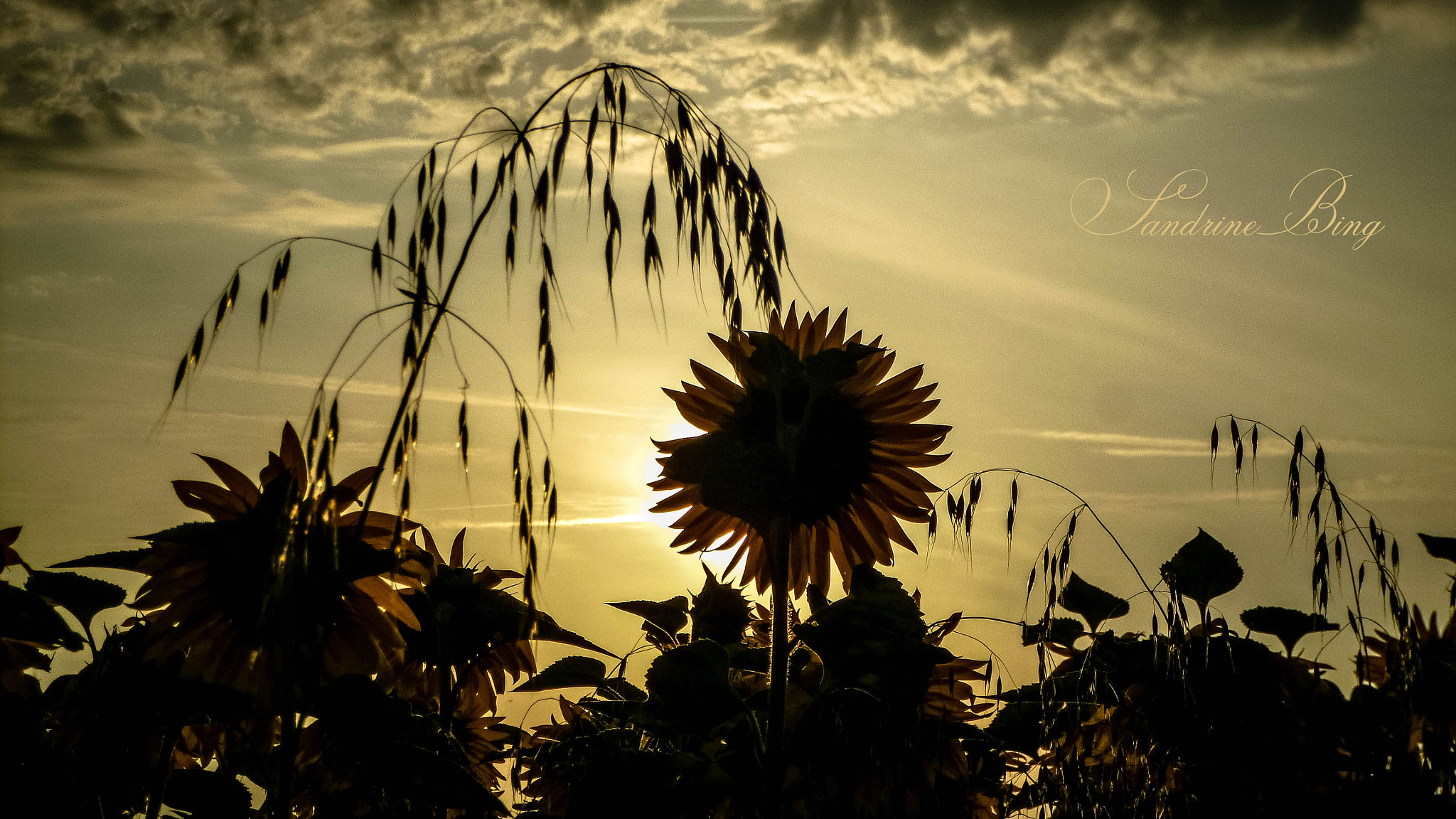 Photograph Here comes the sun ! by Sandrine Bing on 500px