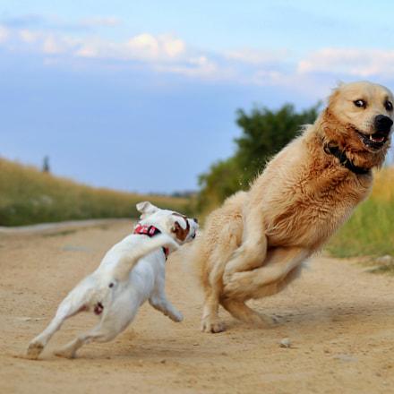 Terrier Terror!