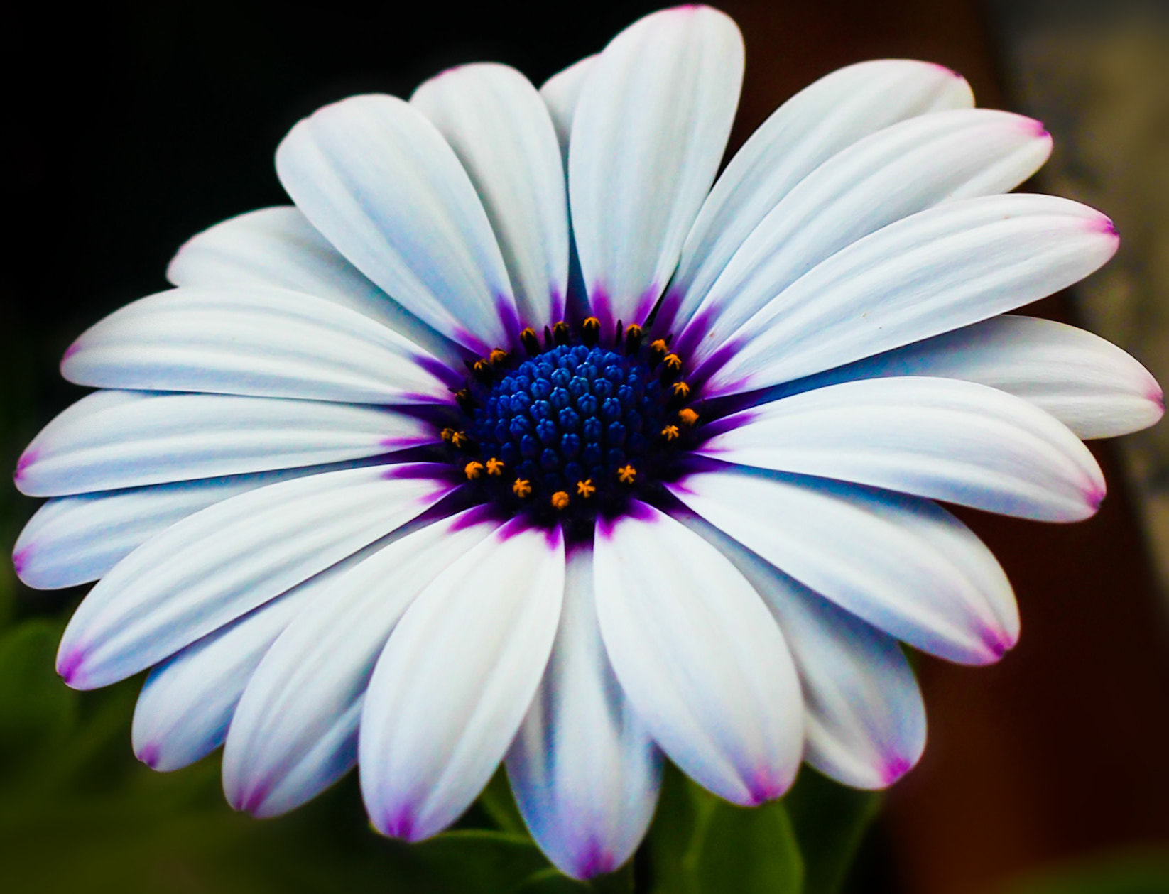 Photograph Flower by Vanesa  Barrantes on 500px