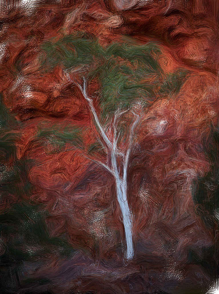 Photograph Gum Tree by Kevin Raber on 500px