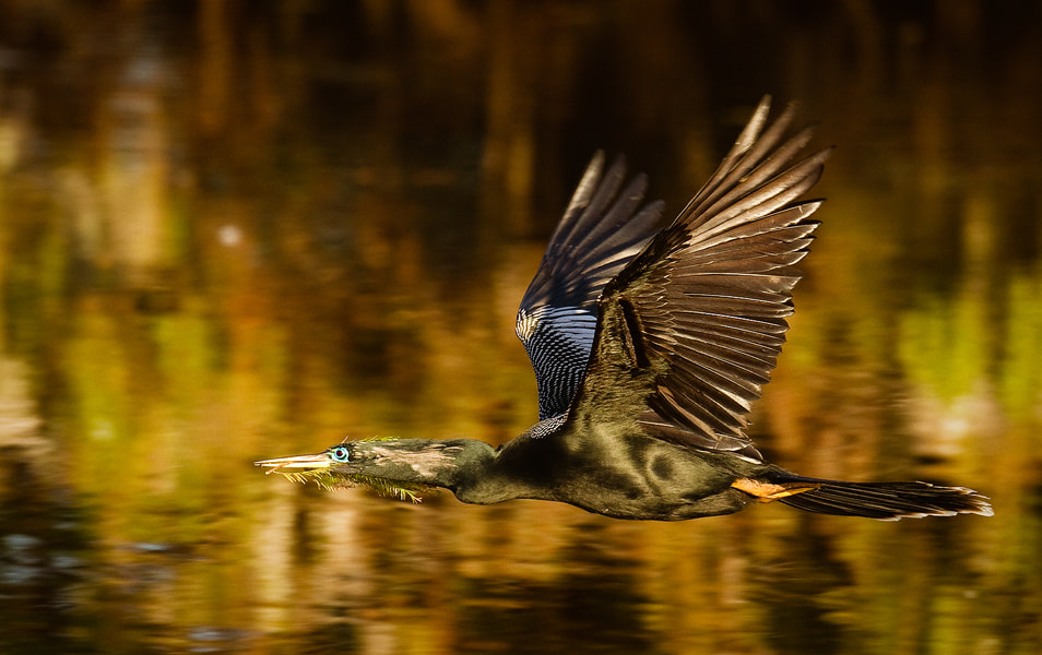 Photograph Building the Nest by Phillip Simmons on 500px