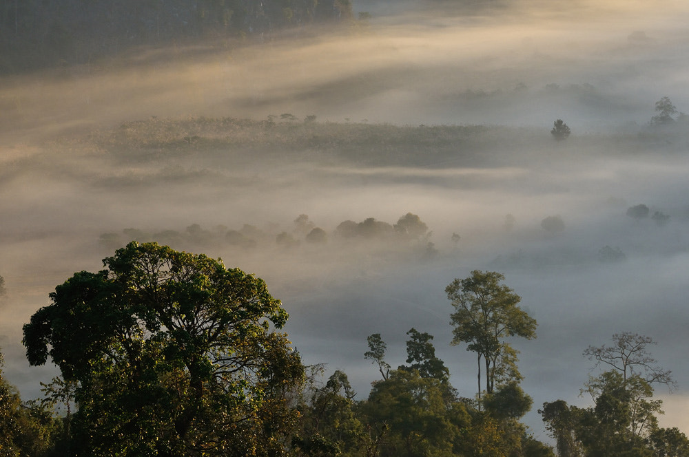 Photograph Natural light fog by real chi on 500px