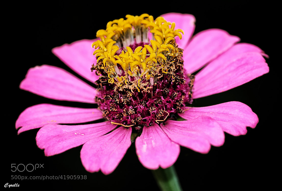 Photograph Bloomin' Beauty by Cyrelle K on 500px