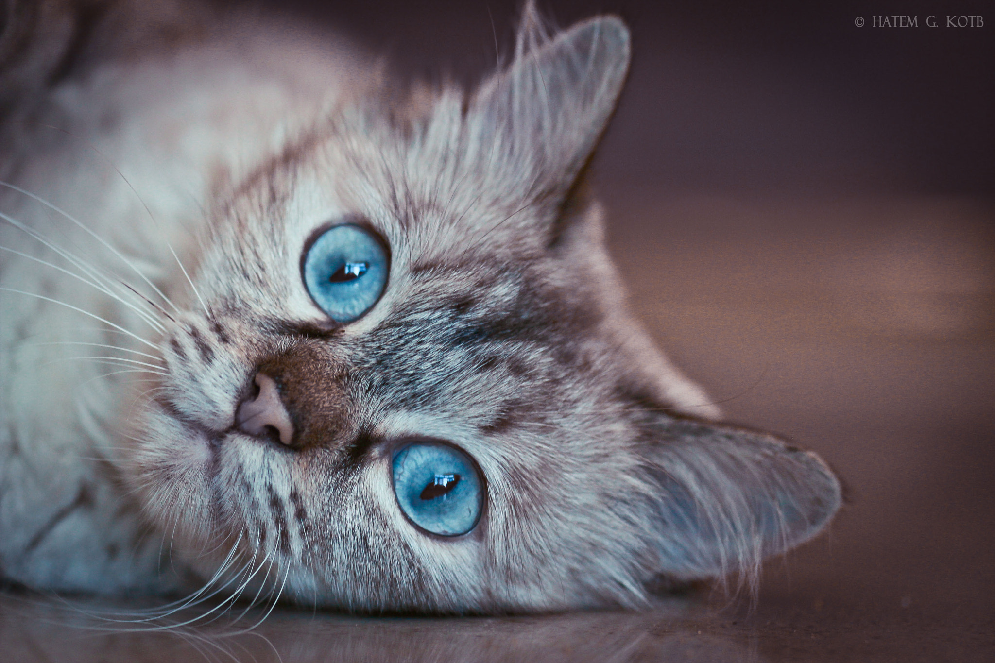 Photograph Blue Eyes by Hatem Kotb on 500px