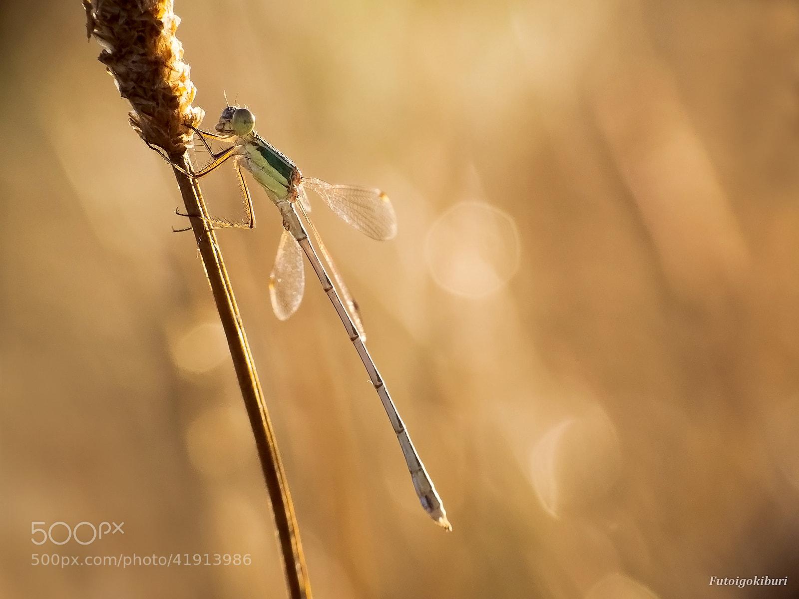 "Photograph ""Light"" by Julien Martin on 500px"