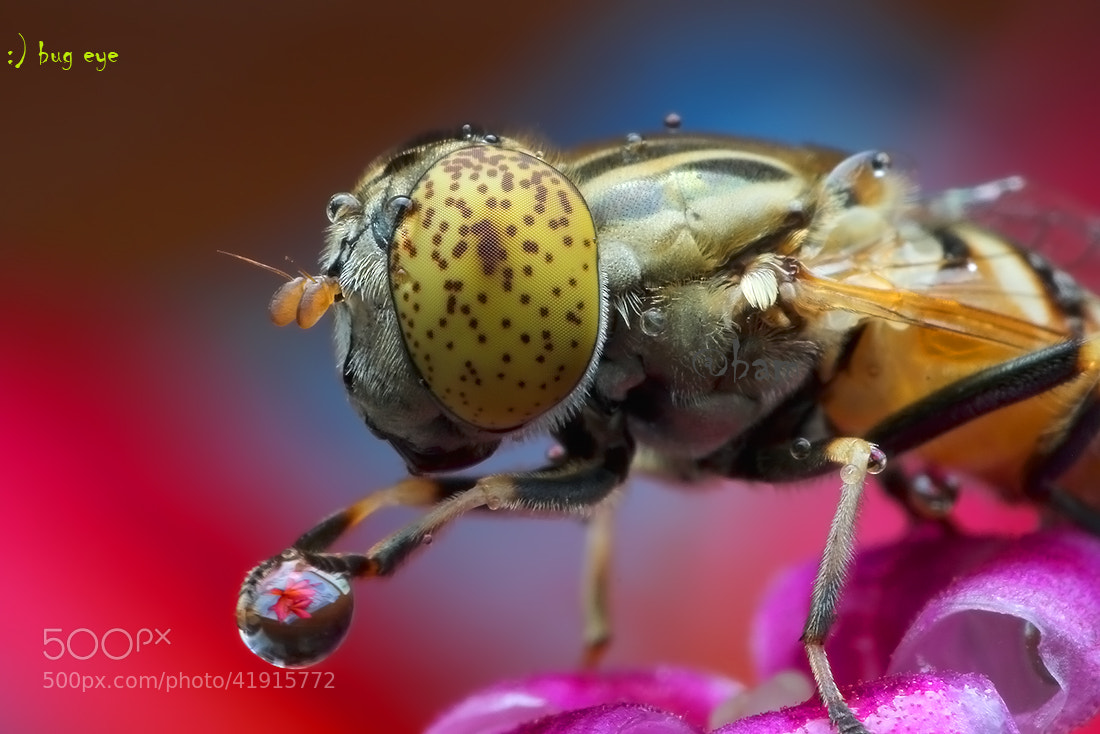 Photograph my drOplet by bug eye :) on 500px