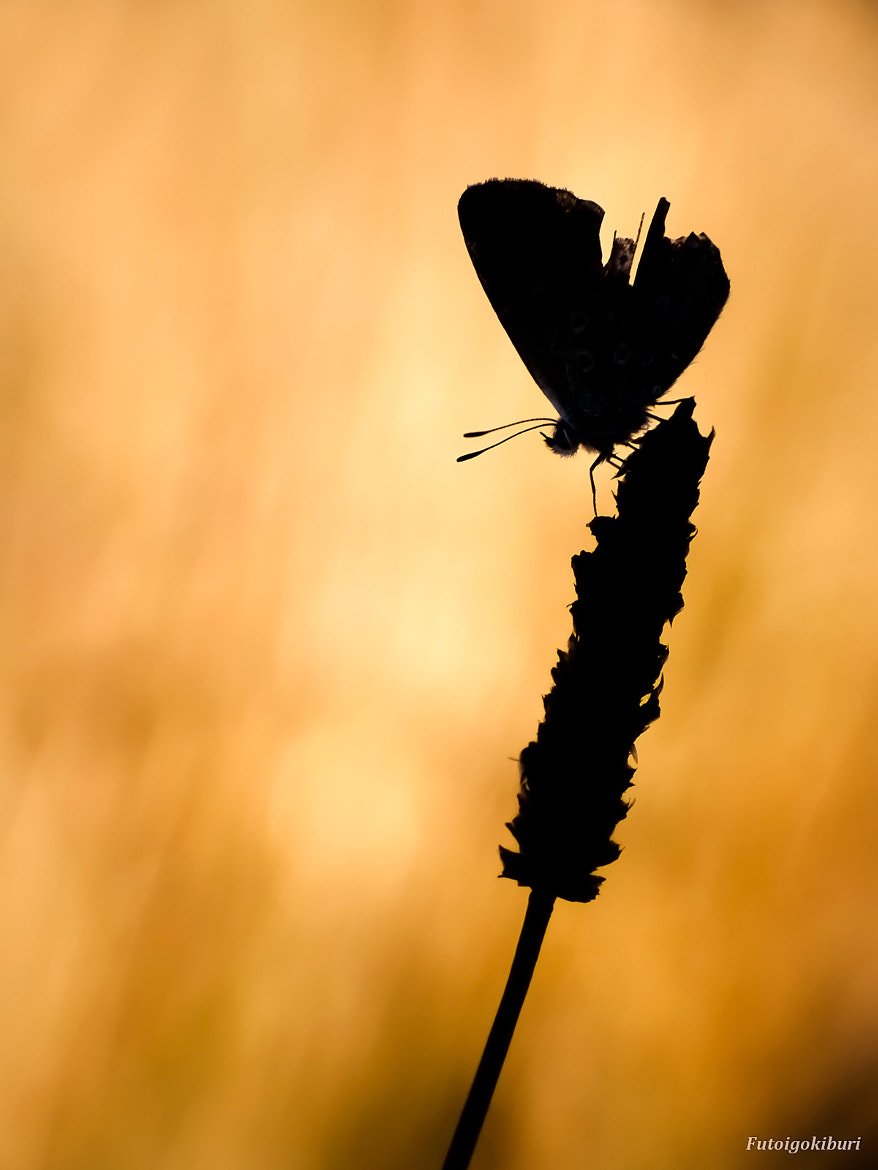 """Photograph """"Silhouette"""" by Julien Martin on 500px"""
