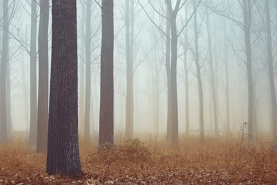 Photograph The forest, in winter by Greta Spinoni on 500px