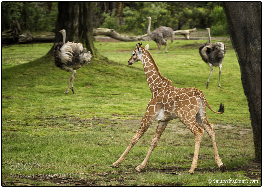 Photograph Chasing Birds by Laurie Rubin on 500px