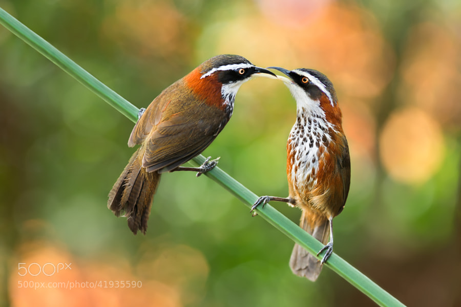 A Touch Of Love by Sue Hsu on 500px.com