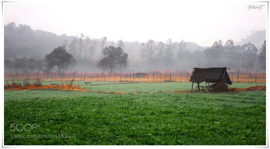 Photograph Nature's Glory   ਠੰਡ ਦਾ ਨਜਾਰਾ by Jaskiran Singh Batra on 500px