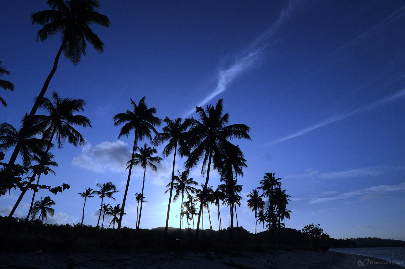 Photograph Coqueiros // Coconut trees by Francisco Cribari on 500px