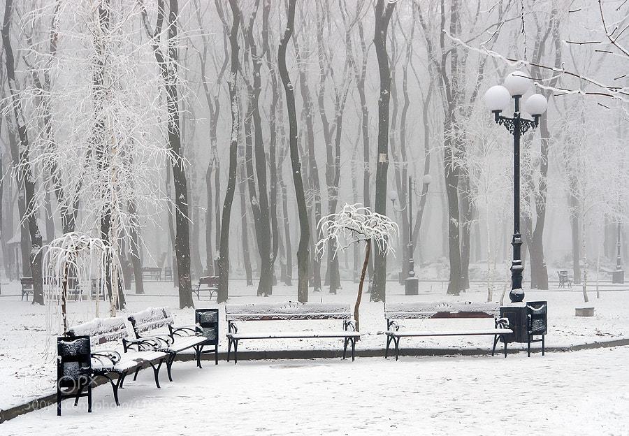 Winter at the park by Oleg Milyutin (Oleg_Milyutin)) on 500px.com