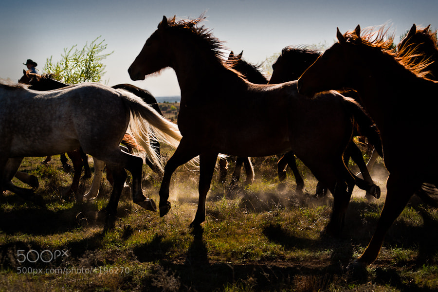 Horses running on the ranch