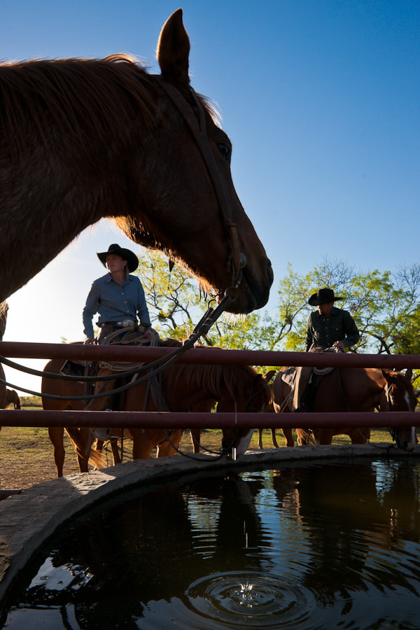 Horses taking a drink on the Saunders Twin V Ranch